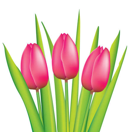 vector bunch of pink tulips Illustration