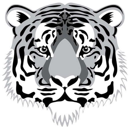 tiger white: testa di tigre Vector Vettoriali
