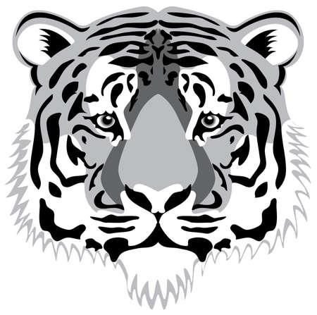 big cat: vector tiger head Illustration