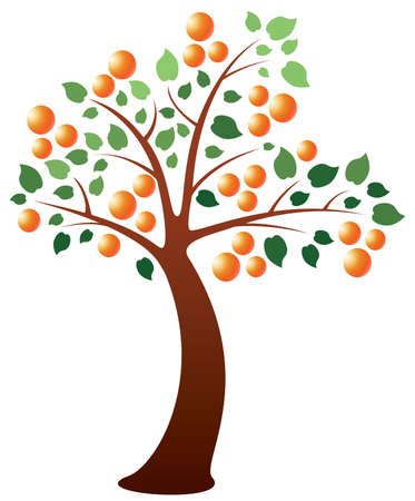 orange tree Stock Vector - 8977801