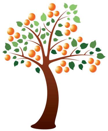 orange tree: orange tree