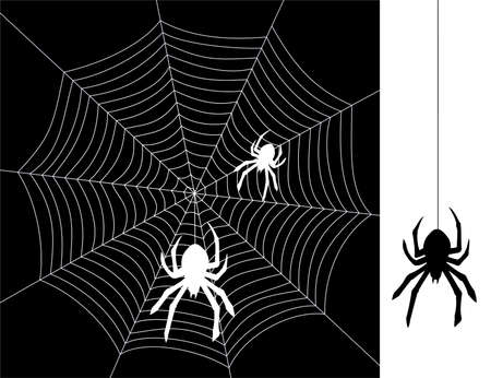 vector spiders and web Vector