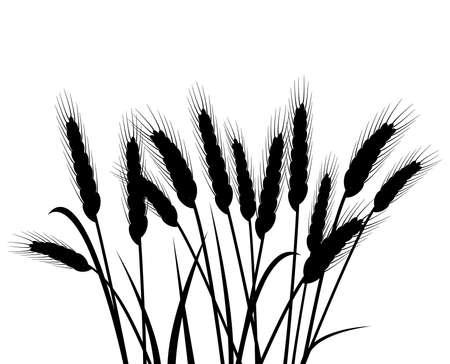 pęczek kłosów pszenicy wektorowej