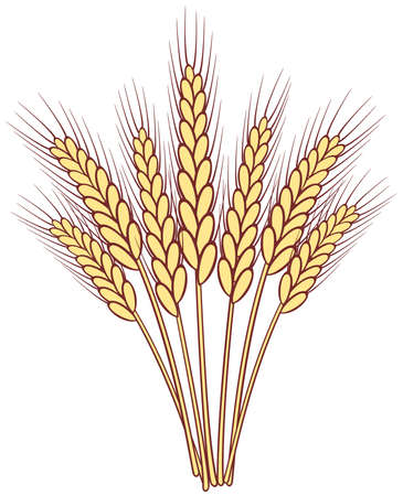 bunch of wheat ears Stock Vector - 9571677