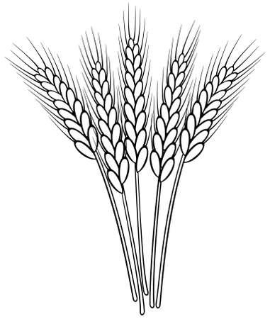 stel vector zwart en wit tarwe oren Vector Illustratie