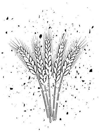 bunch of vector black and white wheat ears in grungy style Vector