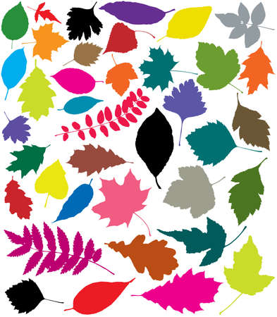 ash tree: colorful silhouettes of leaves