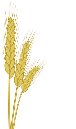 wheat illustration: background of wheat ears