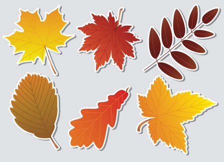 vector autumn leaves with white border Vector