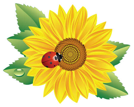 vector sunflower and red ladybird Vector