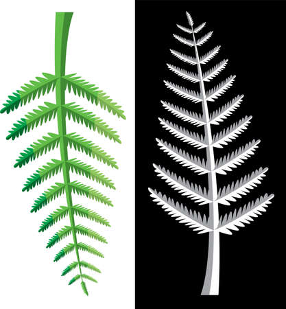 black and white image: vector design of fern leaves