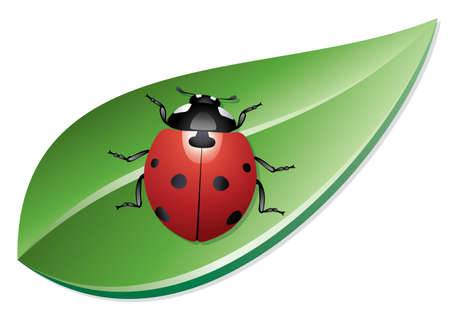 vector ladybird on a leaf Stock Vector - 11662788