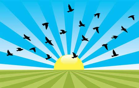 sol naciente: Resumen de vectores de paisaje rural con el sol naciente y las aves que vuelan