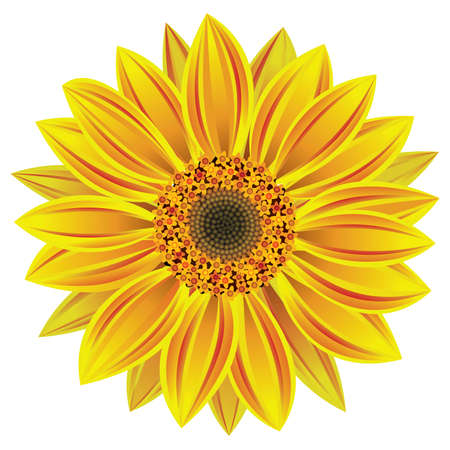 zonnebloem: vector illustratie van de zonnebloem