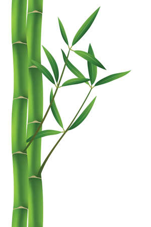 bamboo leaves: vector illustration of bamboo brunches