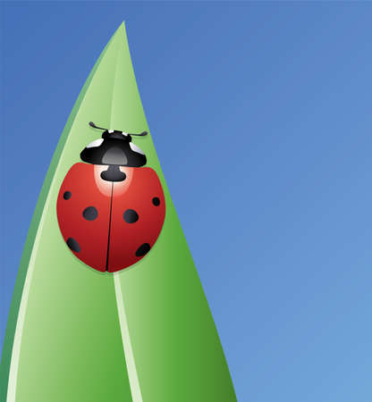 vector ladybird on a leaf  Vector
