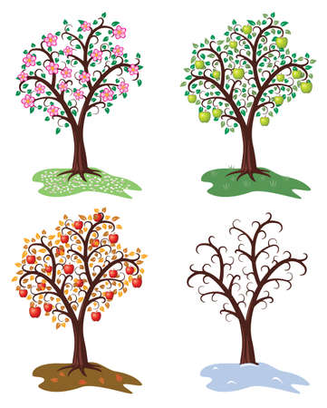 vector set of four seasons of apple tree  Stock Vector - 12155592