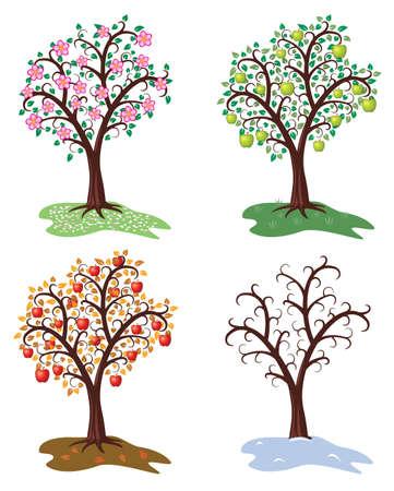 winter garden: vector set of four seasons of apple tree
