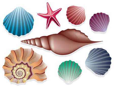 clam illustration: vector collection of sea shells