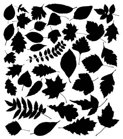 vector black silhouettes of leaves Illustration