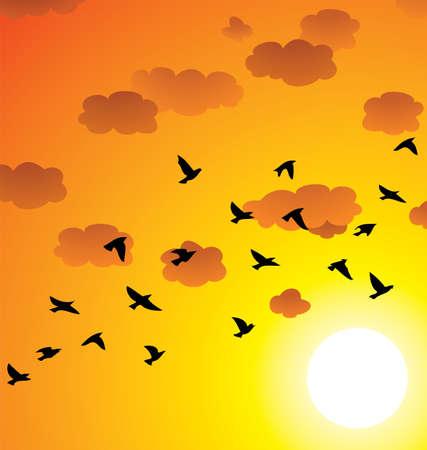 bandada pajaros: vector de una bandada de pájaros volando, las nubes y el sol brillante en el atardecer o el amanecer