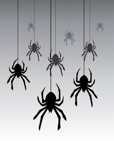 black and white spiders: vector illustration of hanging spiders