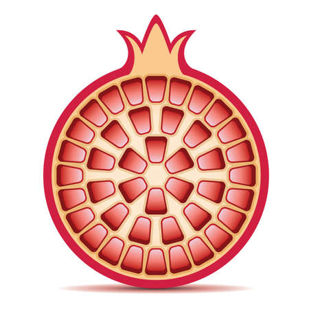 vector illustratie van granaatappel