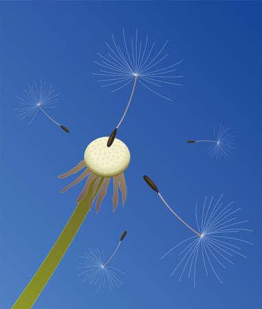 blows: illustration of dandelion seeds blown in the wind Illustration