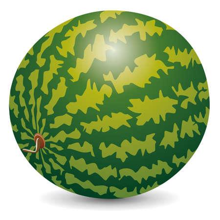 watermelon Stock Vector - 14231395