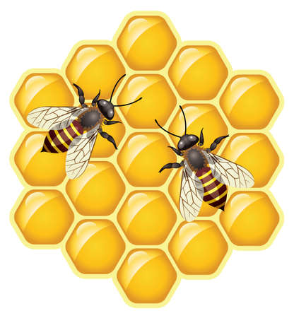 honeybee: working bees on honey cells