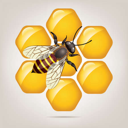 symbol of working bee on honeycells