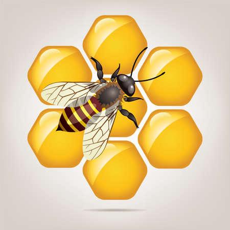 honeybee: symbol of working bee on honeycells