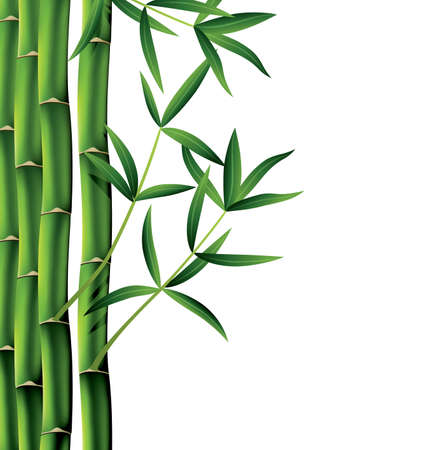 lucky bamboo: vector illustration of bamboo branches on white background