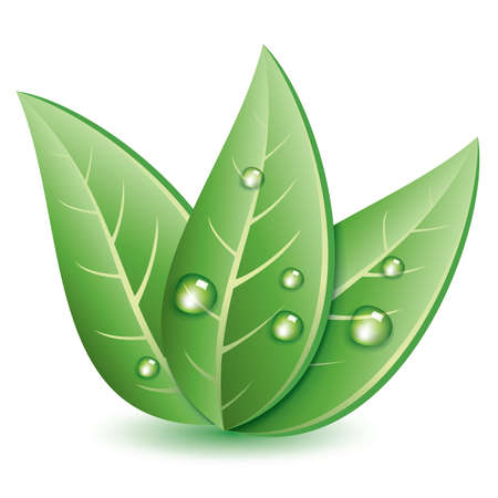 wet leaf: vector symbol of green leaves with drops of water Illustration