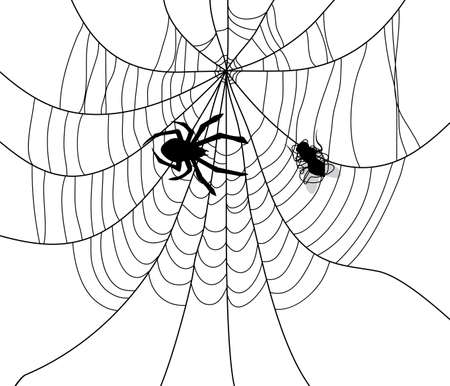 fly cartoon: vector illustration of spider, web and a caught fly