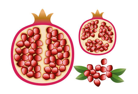 vector vegetarian illustration of pomegranate with grains and leaves Vector