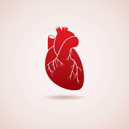 ventricle: icono rojo del coraz�n humano Vectores