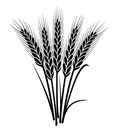 Vector czarny i biały kilka kłosy pszenicy z pełnego ziarna i liści