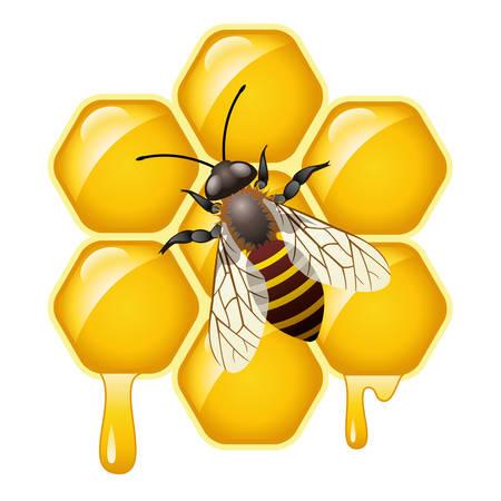 honeybee: vector working bee on honeycells