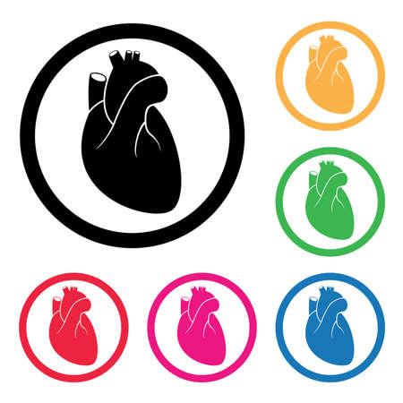 cardio: vector human heart cardio icon