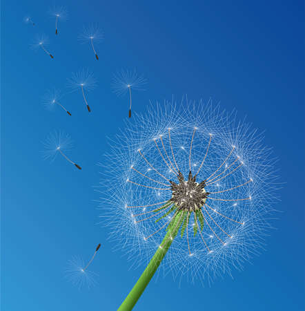 blown: vector illustration of dandelion seeds blown in the wind