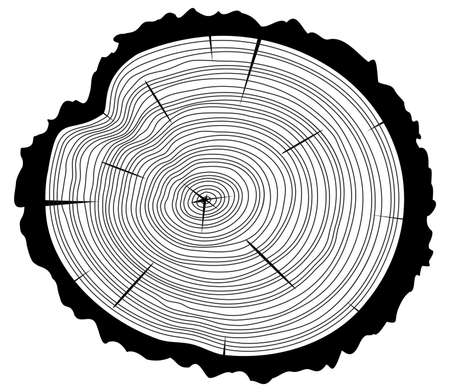 rings on a tree: vector black and white wooden cut of a tree log with concentric rings and bark