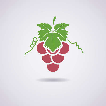 grapes on vine: vector icon of grapes