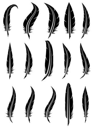 vector set of black and white feathers Illustration