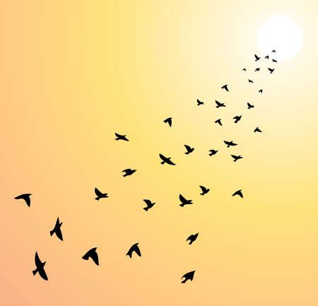 vector zwerm vliegende vogels in de richting van felle zon