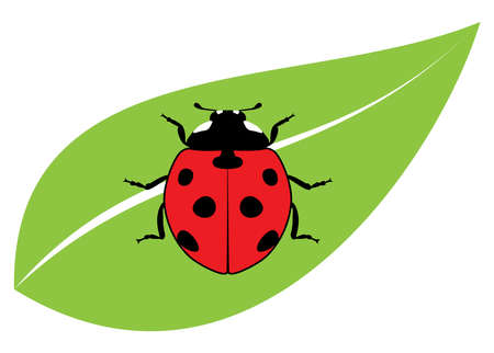 ladybird: vector red ladybird on a green leaf Illustration