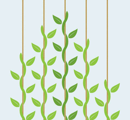 lead rope: leadership or competition concept with climbing plants where leader is stronger than followers