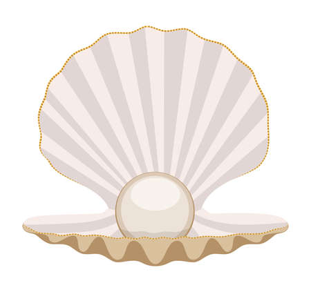 pearl shell: vector pearl in a shell Illustration