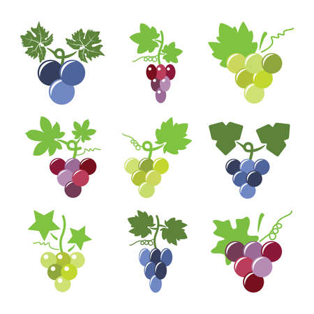 red grape: vector colorful icons of grapes