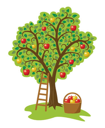 drawing trees: vector design of single apple tree with fruits, basket and ladder Illustration